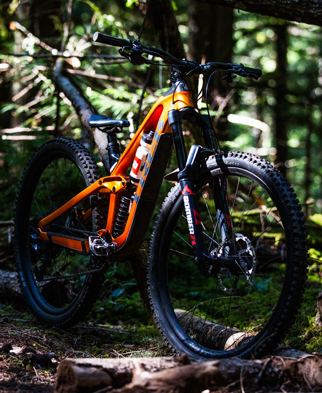A bike posed in the woods