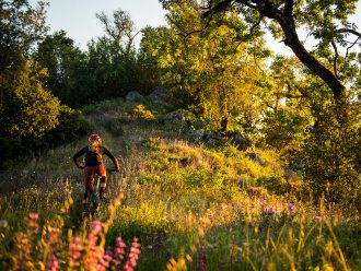 Rider climbing a hill covered in wildflowers